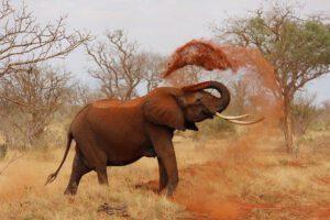 afrika prostovoljstvo slon