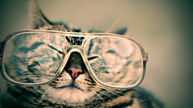 očala maček